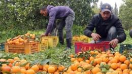 subcomisión de estudio de la viabilidad del sector citrícola y la comparecencia del director de la agencia de información y control de la cadena alimentaria, José Miguel Herrero Velasco