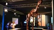 Una réplica corpórea a tamaño real de los dinosarios 'Losillasaurus giganteus' y un esqueleto de 'Spinosarus' amplían la muestra 'Els nostres dinosaures' del Museu de les Ciències