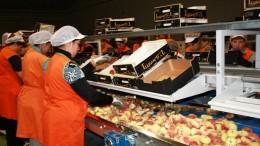 La Agencia de Seguridad y Respuesta a las Emergencias inicia una campaña de inspección en almacenes hortofrutícolas