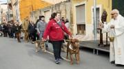 Los animales, protagonistas en Almussafes durante la fiesta en honor a su patrón
