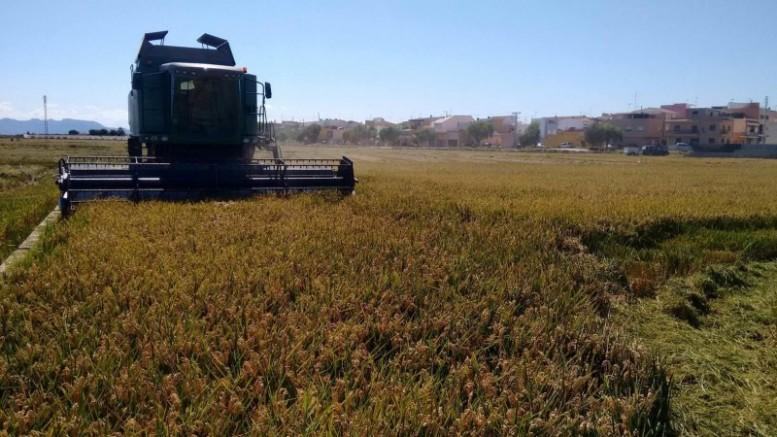 El Consell abona hasta diciembre 60,5 millones de euros de las ayudas europeas a más de 50.000 agricultores y ganaderos