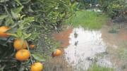 El temporal de lluvias e inundaciones de diciembre deja una cifra de pérdidas en el campo cercana a los 320 millones de euros según LA UNIÓ