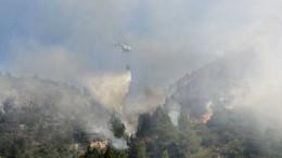Agricultura participa en la plantación de árboles en la zona afectada por el incendio forestal en la Vall d'Ebo de 2015