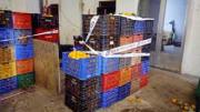 La Policía de la Generalitat interviene 7.000 kilos de naranjas en un almacén clandestino de Sagunt