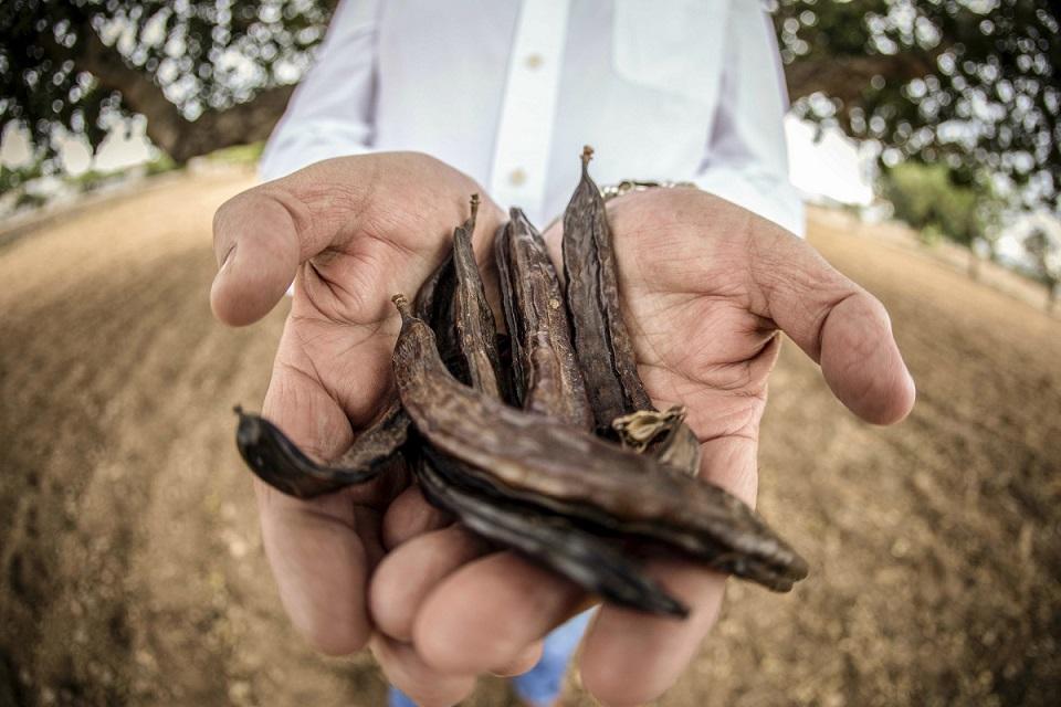 Algarrobas de Ibiza