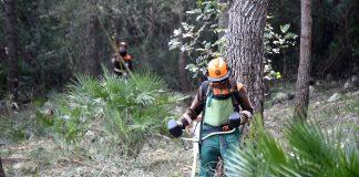 Las brigadas de Diputacio acondicionan 36.000 m2 en Alzira para prevenir incendios
