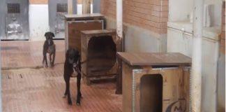 La Mancomunitat de L'Horta Sur eliminará por fin el sacrificio de animales abandonados