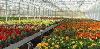 El Consell aprueba un paquete de ayudas de 2,6 millones de euros para los productores de flor cortada y planta ornamental