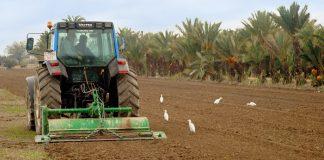 """Randstad """"100.000 personas trabajarían en el campo para salvar las cosechas """""""