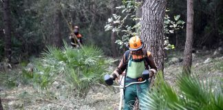 Las brigadas forestales de la Diputació retoman sus trabajos de silvicultura para prevenir incendios