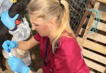 Estudiantes de Veterinaria de la CEU UCH participan en un proyecto de aprendizaje cooperativo internacional sobre Agentes Biológicos