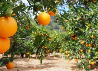La UNIÓ y AVA-ASAJA piden a la Generalitat un protocolo de actuación eficaz y consensuado para la contratación de personas temporeras en las próximas campañas agrícolas