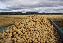 Mercadona prevé comprar 92.000 toneladas de patatas de origen nacional para la campaña de este año, un 7% más que en 2019