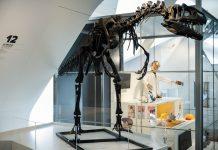 20 años del Museu de les Ciencies con una muestra que repasa la hsitoria del Museo