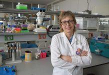 Investigadores del CIPF desarrollan una nueva herramienta para el diagnóstico genético de la enfermedad de Wilson