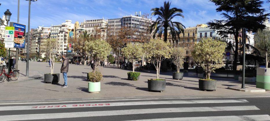 El nuevo bosque de maceteros de la Plaza del Ayuntamiento